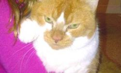 I have an orange and white cat, very soft fur, very loving, will cuddle you for hours, free to a good home.  My kids wont stop tormenting him and I would like to give him away to a home where he can be happy.  Kitty is a neutered male, between 4 and 5