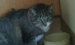 I have a 5 year old male cat free to a good home with no ther animals. I have had him for almost  ayear  but he does not first but he doesnt get along with my other cat so im looking for a good home for him. his name is tank. hes a little scared and