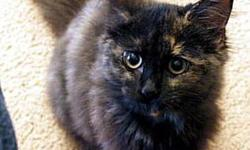 FREE Kitten Female To Good Home 3-5 Months old aprox Very Affectionate. Call [519]701-0262