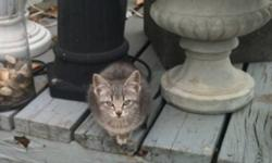 2 grey kittens. Both female. About 2 1/2 months old. Both are used to people and would make great indoor or outdoor cats. Please call Melissa at 780 832 8802. This ad was posted with the Kijiji Classifieds app.