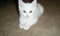 3 kittens need good homes. We already have 3 cats and do not need 3 more! White, Orange, and Black with orange and white. Please call KC @ 403-715-7331 for information