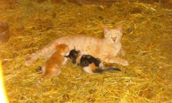 My grandfather has a LOT of kittens and some older cats to give away, all free. There are 6 that still need a few more weeks before they're ready to go, but the others can go anytime. They're all playful, cuddly, and cute. They're easy to litter train and