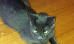 Free, loveable, affectionate female cat looking for a good, warm & loving family...She is just over a year old, grey in colour, very affectionate, and is great around children.