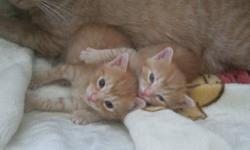 I have two beautiful kittens for free! only to a good home!         READY TO GO NOW!