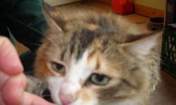 A very friendly cat showed up at our barn. As much as we'd like to, we cannot keep her. very friendly beautiful mixed colour with light green eyes we have had her inside and outside and she is very easy going she even reacted relatively calm to the 3