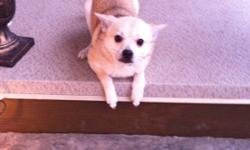 Looking for a puppy for Christmas? We have a 6 month old pomchi puppy named marley for adoption. We just don't have the time anymore as my husband and I have both gone back to work. He is completely potty trained. He will sit, lay down and stay on
