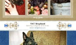 Beautiful pure bred German Shepherd Puppies for Sale www.tntshepherd.com Please call Deanne # 403-279-5707 or go to my web-page for available puppies and google map   5 boys 4 girls   The puppies are CKC registered. Vet checked, their first shots,