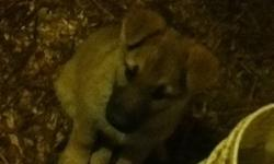 Adorable German shepherd pups available. Males and females. Phone calls preferred. 905-776-0946 This ad was posted with the Kijiji Classifieds app.