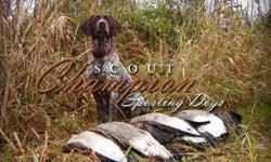 Champion litter of German Shorthaired Pointer puppies. This is a repeat breeding that has produced incredible pups. If you love the outdoors and our passionate about being active and enjoying God's creation and want a friend to enjoy it with, then this is