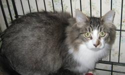Hello my name is Giz I may seem a little scared ,but will warm up soon as I know you . Oh yes and I love belly rubs and attention. I am neutered with shots and will come with the vet papers to prove it. I will be at the Oxbury Mall at Oxford and Highbury