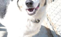 FREE WITH APPROVED APPLICATION UNTIL DEC 31/11 Jesse's Adoption Promotion Video on Youtube - http://www.youtube.com/watch?v=glzaXcZF5Ps   Handsome Jesse is a 6 year old Collie cross male. He used to live on a farm but has a bit of wander lust and was