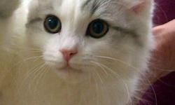 These beautiful kittens are already fixed & vaccinated!!!   They are very loving, always purring and very energetic and playful!   Meet The Kittens! http://www.ucrcats.com   Hudson - Gorgeous kitten, fluffy and super sweet. Almost identical to his brother