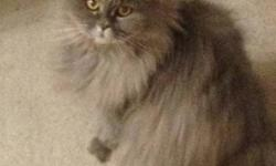 To give away to a great home, full grown female cat. She is fixed & declawed, very mellow & great personality. She is Himalayan/Persian mix and approximately 11 years old and is an inside cat. We are moving and can't move her with us, so she needs a great