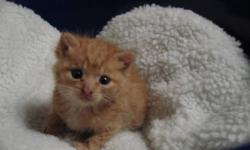 Important message to all cat owners : As you may have noticed, there?s a growing number of cats wondering the Toronto area. You can do your part to help prevent more homeless outdoor kittens being born. Currently Toronto has over 500,000 homeless cats on