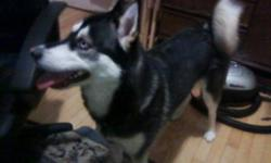 I Have a Female Husky , She has One Blue Eye and One Brown Eye She is A little Over 2 Years old, She is House Trained , she also is not Fixed . She Listens very well . She is Great with Children. She Needs a New Home as Soon as Possible if Intrested
