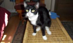 i have a beautiful kitty that needs a good home. i rescued her and took care of her to bring her back to health. she has had her shots just in case she never did. she black and white and very loving. if you have instant love feel free to contact me.