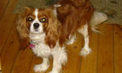 We  have 4 purebreed CKC registered King Charles Cavaliers for sale ,which were born on Nov.14/11 , 2 boys and 2 girlsReady to go jan.8th/12 ,We have puppy pictures and the pedigree papers for the mother and father.The coloring is blenheim ,white and