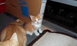 Free kittens in 2 weeks.