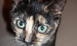 Orange and black (tortoiseshell) female.  A neighbour found this little girl wandering around her back yard, half starved.  My mama cat adopted her into the litter.  Vet estimates birth date to be July 20th.   This is a very quiet and gentle kitten.  She