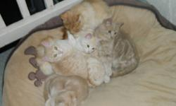 We have 3 males and 1 female.They are orange tabby.