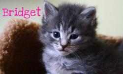 SCAREDY CAT RESCUE  has a number of kittens and cats seeking purrmanent homes. Some of the kitties are already spayed or neutered. They are in foster homes anxiously awaiting fur-ever homes. We have young kittens to adult age, all colors, black, brown,