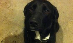 Name gunner sits comes when called and shakes a paw This ad was posted with the Kijiji Classifieds app.