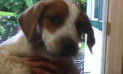 This female puppy needs a good stable home. This is a rescue puppy that came from a tough situation. The original owners could not care properly for the pups. She comes with her first set of shots and has been d-wormed. This pup is bright and is always