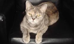 MOVING ..... MUST SELL AS SOON AS POSSIBLE!!!!! DOMESTIC SHORT HAIRED LIGHT GREY CAT, 10 YEARS OLD, FEMALE, NOT SPAYED, INDOOR CAT ONLY, LOVES ATTENTION, LOVES TO CUDDLE AND PLAY, VERY VERY FRIENDLY, GOOD WITH DOGS AND HAS BEEN AROUND OTHER CATS, TO A
