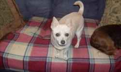 male , fixed and shots up to date, needs new home, great little snuggler, he is a one person dog. house trained. crate trained, will come with his bowls, crate, leash, coat.
