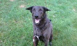 I am looking for a good home for my 8 year old lab/sheppard cross, Pheonix. He is good with kids and does not jump up on people. He would do well in a home with kids and a yard to play in, but he also does fine during the day on your own while you might