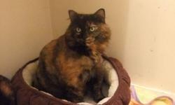 My name is Maddy. I am four years old. I am looking for a new home. My human mommy and daddy had a baby in June and I am scared of him. However I do love older kids. My human parents do have a 12 year old boy and I love him dearly. I love to cuddle on