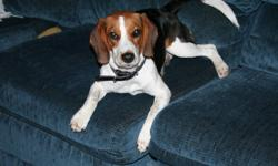 We have a sweet 3yr old spayed female beagle who needs a new home.  She needs a home where her pack is home more than they are away.  She is good with kids, cats, and loves to play with other dogs.  She loves car rides, walking, hiking and then curling up