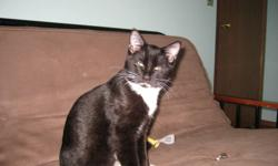 Our cat went missing in Kentwood area on Wednesday, October 12, 2011. His name is Ryder and he is a black and white ,neutered DSH .He has an ear tatoo for identification: XPI208. We miss him terribly and just want him to come back home. If you find him or