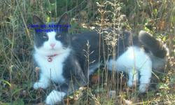 lost in cantly village area short haired grey and white male cat. He is 8yrs old and very friendly. If found please call 371-2555 he is greatly missed.........thank you