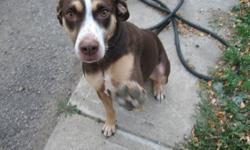 3 yr old female, spayed,  Louisana Catahoula Leopard dog. I am  good with children and I like to run and play.  My foster parents are retiring and  going South and I am looking for a new home.   Plse call John 222-0518 if you would like to meet me.