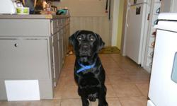 need a good home with property for my loving black lab.. he is two years old.. great with kids and other animals...he is neutured and updated with all shots... reason why i need ot find him a home is i am spliting up and i can not take the dog..and the