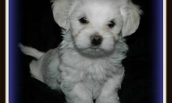 We are looking for forever homes for our precious little pups.  They are cute, lovable and social...they will just steal your heart!    Tika is a 10 lb maltese x shitzu (Pic 5).  She is a calm, gentle, cuddly little lady that has been a fantastic mommy to
