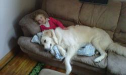 Marley.... hes a big dog with an even bigger heart. loves to snuggle and is great with kids. was raised around 2 children ages 2 - 5. He is approx 10 months. He is a large dog and we just dont have the room or time for him. He is alone most of the day