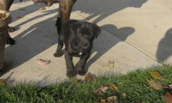 Beautiful little pup,  very social and great with kids.  He has his shots and ready for a new home.