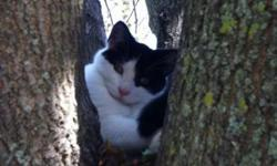 Missing kitten , he's about 4-5 months old. Black and white ,he was last seen around neighborhood October 18th. Around Ross st & John st welland. If you have seen him please email me ! This ad was posted with the Kijiji Classifieds app.