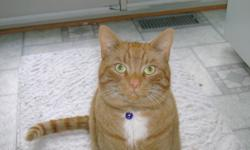 Missing Cat !!    Bay St Hastings area Orange Tabby Cat named Monkers with unusually long tail last seen on Saturday, Nov 26th.  Please Call 705 696-1082 if seen.  Really missed by his family. Thanks