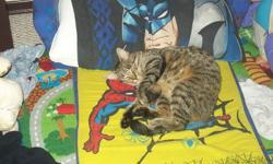 Missing is our fun loving affectionate Azzie. Azzie is a 2yr old Tabby cat with an orangish belly she is also spayed. My son and I miss her very much.. She was last seen about a week ago in the Southview area. However she was once found in Southridge...