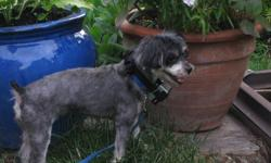 Morkie Poo dog for sale by owner, $100 . to give to a loving and caring family . Would like to meet family first. Cute and lovable black with brown spots, can no longer be taken care of by owner due to medical reasons. Please contact by email if