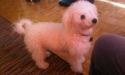 $600 OBO!! No reasonable offer refused!! 6mth Bijon Frise needs a good home asap. For more info please email me. Thank you