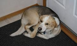 Teagan is a german shepard/beagle cross puppy. She is a year old and is very loving, happy and great with kids and other pets including cats! She has alot of energy and would do best in a new home that has a fenced backyard with room for her to run and