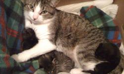 I have 2 cats that I need to give away to a good home. I am very sad to say that I have to give my cats away. I am looking for a very good home for my cat and her kitten. When my cat had kittens someone had said that they would take the kitten and the