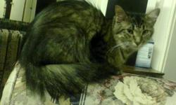 Please take my cat... She is very playful and she needs a home now... If she isnt gone by the end of this week I will have to find another alternative for her... She is part maine coon so please take her... Her name is Nemo... Here is my phone number...