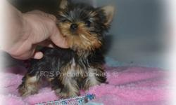 VERY TINY!! exquisite baby doll girl, she is amazing in every-way, Posh is 4 moths old and weighs a whole 12oz !! she is extremely rare and you will not find one like her anywhere ! she is so small she does not look real, Her coat could not be more