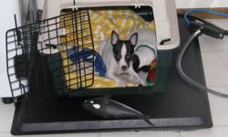 One tiny Toy Fox Terrier male needing a good home UKC registered. Ready to go now. He is a tri colored tiny boy very socialized already loving to be on your lap. He has his tail docked, Dew claws removed and health checkup with first set of shots. He