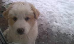 One puppy left! female, she will be a big playful dog that is good with children. call 381-7689